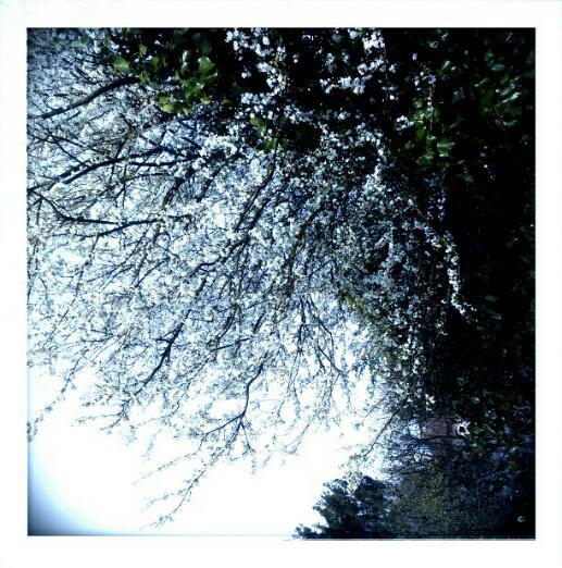 Tricotandco.fr - Joli paysage de printemps